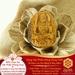 Mặt Dây Bất Động Minh Vương Bồ - Đá Mắt Hổ - Tuổi Dậu | Dụng Thần Thổ
